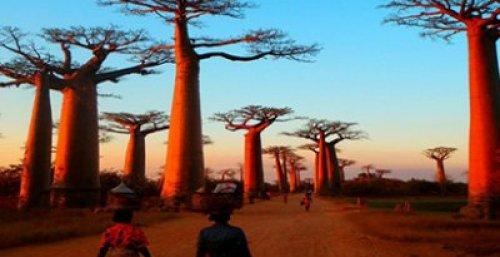 Ang Alley ng Baobabs